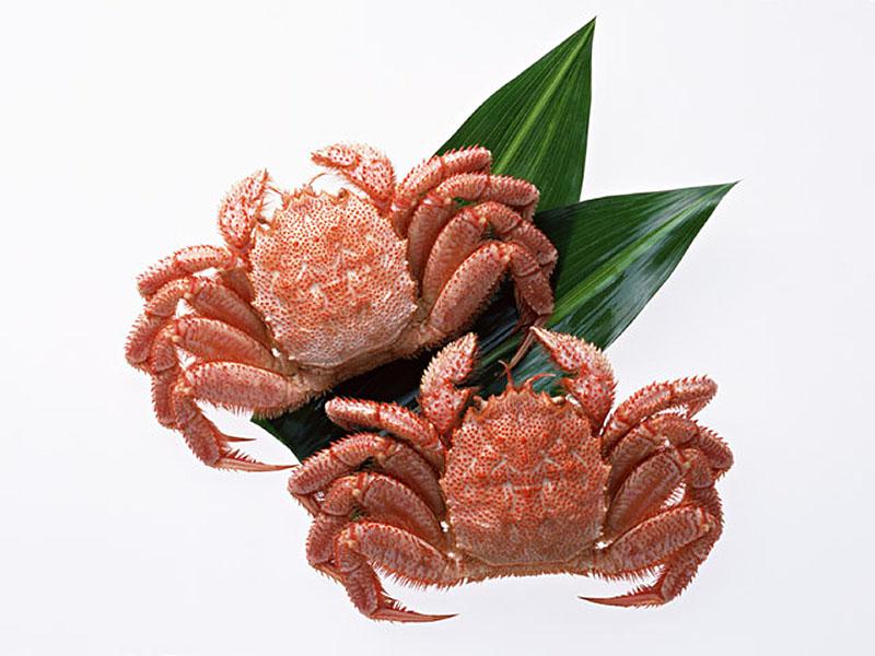 蟹、海老、ふぐ、その他
